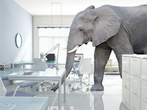 Software Productivity Index Elephant in the Room